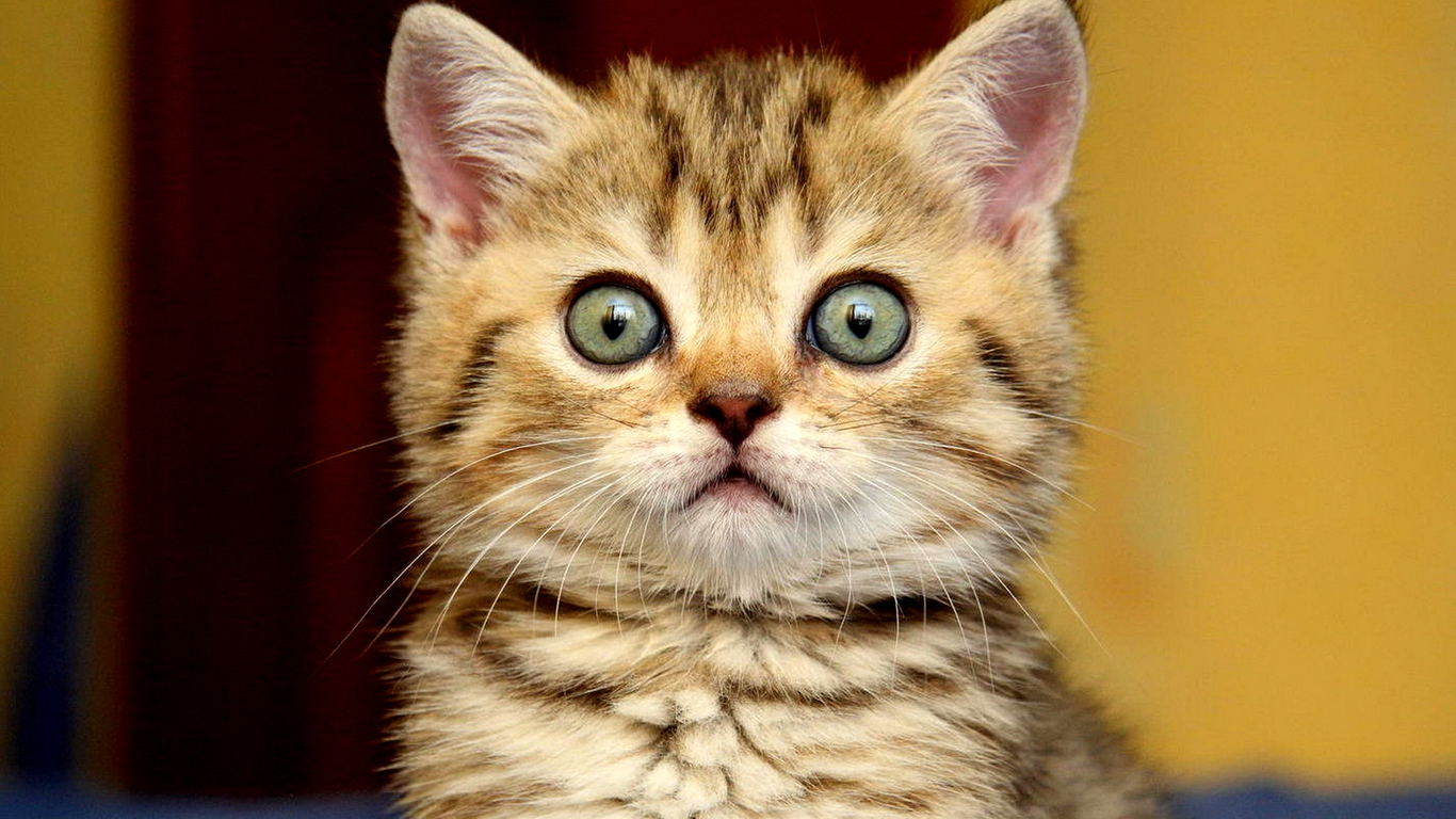 25 Hilarious Photos Of Animals Looking Shocked