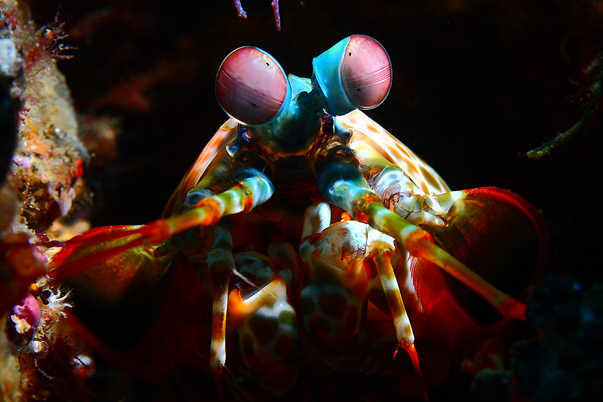 26 Amazing Underwater Creatures in Indonesia Photographed by Alexis Golding