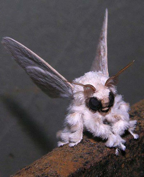 The 25 Most Terrifying Animals In Existence